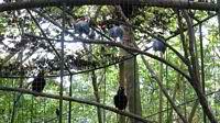Birds at the Crocodile Farm Palawan
