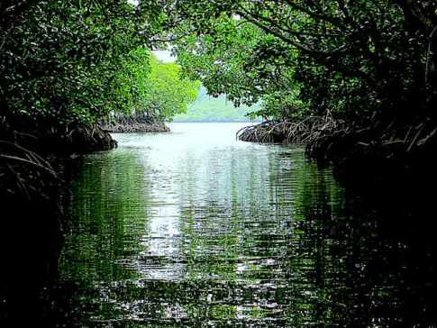 Mangrove River Cruise at Port Barton Palawan