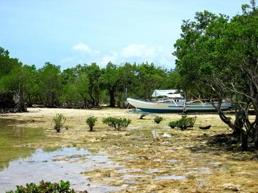 Palawan Province holds majority of the mangrove forest in the country