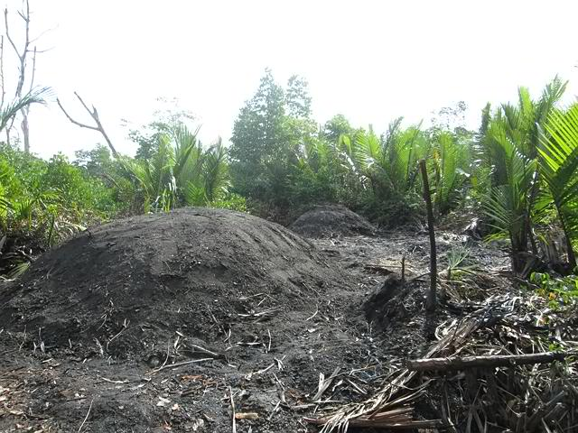 Mangrove trees being burn inside the covered pit for charcoal