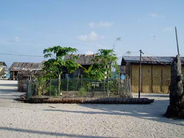 A veggie corner in the island