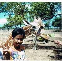 Giraffe In Calauit Game Preserve and Wildlife Sanctuary
