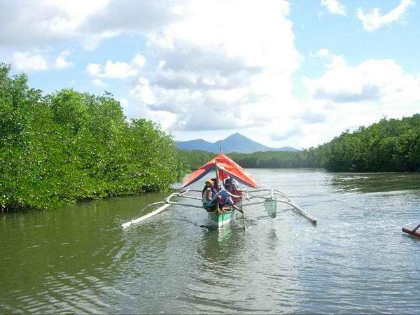 San Carlos Mangroove River Cruise near Puerto Princesa City